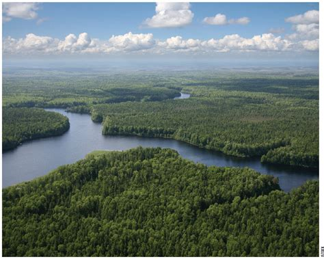 The Canadian boreal forest is one of the world's most