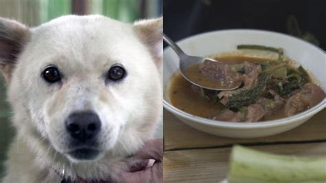 The places around the world you can still eat dog meat
