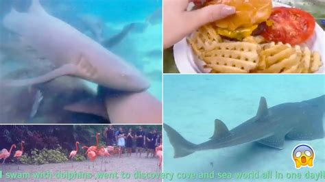 Swimming with dolphins ,discovery cove and sea world in
