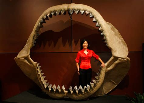 Shark Week Megalodon films: Discovery Channel lies about