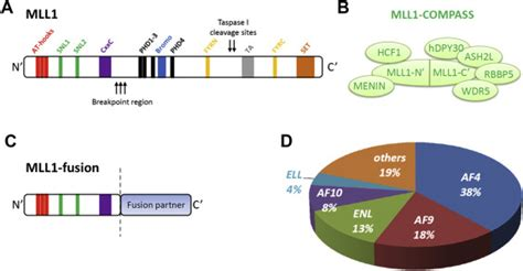Targeting DOT1L and HOX gene expression in MLL-rearranged